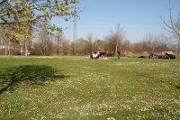 Die Freizeiteinrichtungen werden genutzt - Bolzplatz Neuersh. 6.4.2007