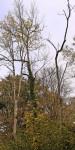 2017-10-25 Marcher Wald bringt finanziellen Verlust