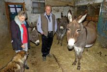 2017-12-08 Hinter der Stalltür von Familie Ganter in March leben drei Esel