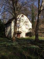 Schneeglöckchen und Winterlinge im Engl.Garten 16.2.07