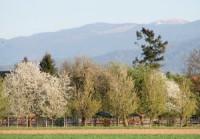 16. April 2007 Es blüht in March, auf dem Feldberg liegt noch Schnee